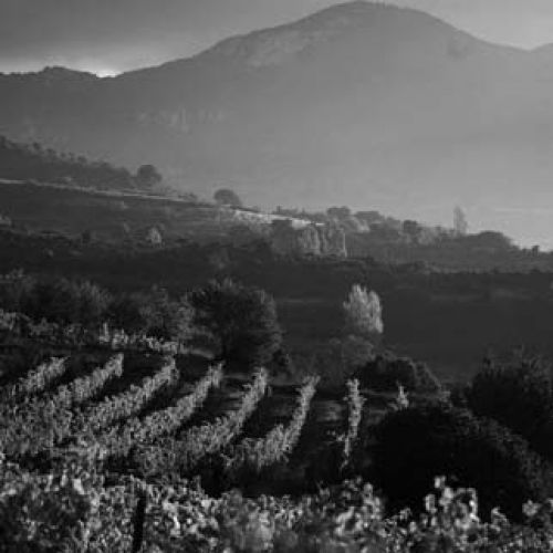 files/images/winemakers/spain/remelluri/remelluri vineyard_SQ.jpg